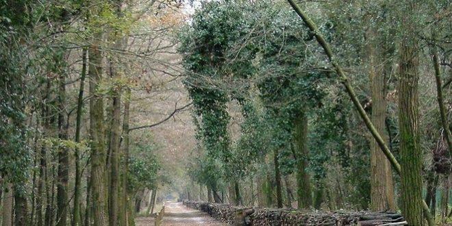 bosco della mesola